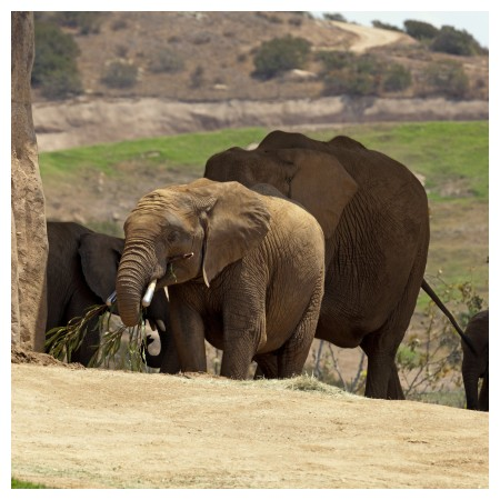 Image of San Diego Zoo - Safari Park